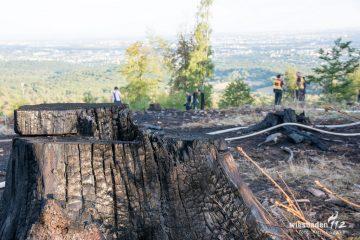 FreiwilligeFeuerwehrWiesbadenStadtmitte-Einsatz-31.07.2018-04